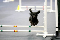 All Dogs Gym Agility March 3 Jumpers 1_1DM30635