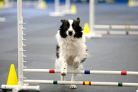 All Dogs Gym Agility March 3 Jumpers 345C_1DM30779
