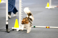 All Dogs Gym Agility March 3 Jumpers 345C_1DM30692