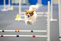 All Dogs Gym Agility March 3 Jumpers 345C_1DM30800