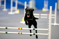 All Dogs Gym Agility March 3 Jumpers 1_1DM30669