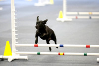 All Dogs Gym Agility March 3 Jumpers 345C_1DM30720