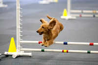 All Dogs Gym Agility March 3 Jumpers 345C_1DM30763