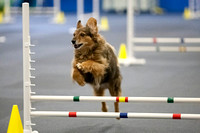 All Dogs Gym Agility March 3 Jumpers 345C_1DM30787