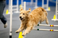 All Dogs Gym Agility March 3 Jumpers 1_1DM30666