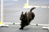 All Dogs Gym Agility March 3 Jumpers 345C_1DM30717