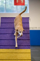 All Dogs Gym Agility March 4 Jackpot 45C_1DM31509