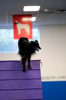 All Dogs Gym Agility March 4 Jackpot 45C_1DM31498
