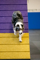 All Dogs Gym Agility March 4 Jackpot 45C_1DM31428