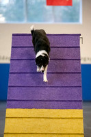 All Dogs Gym Agility March 4 Jackpot 45C_1DM31473