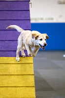 All Dogs Gym Agility March 4 Jackpot 45C_1DM31525