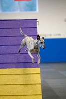 All Dogs Gym Agility March 4 Jackpot 45C_1DM31435